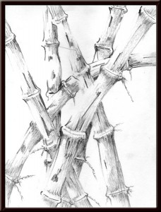 Bamboo sketch