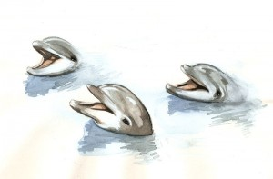 dolphine-water-colour