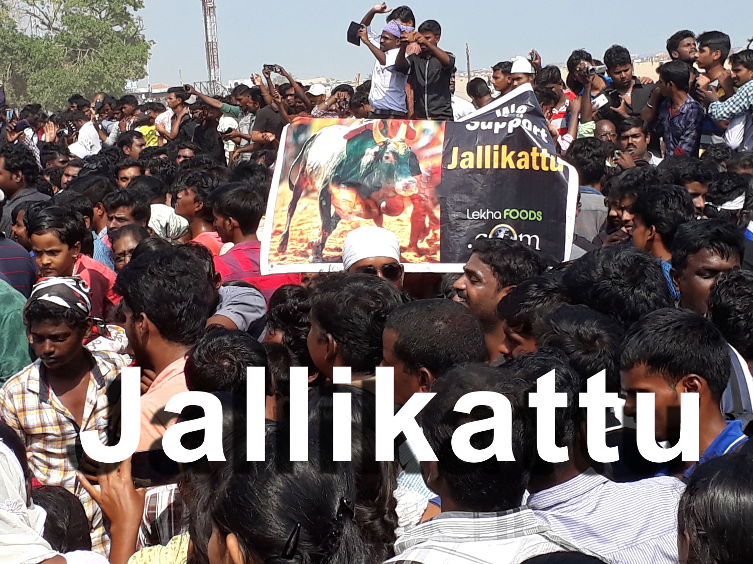 crowd marching in support of Jallikattu