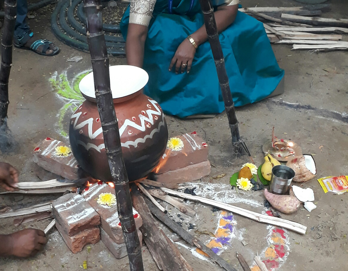 cooking pongal in terracotta clay pot